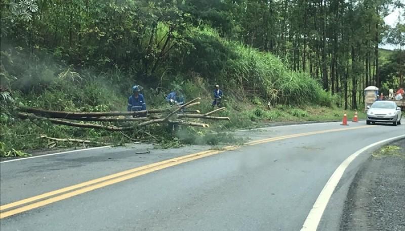 Queda de árvore interdita parcialmente a BR-354 em Córrego Danta