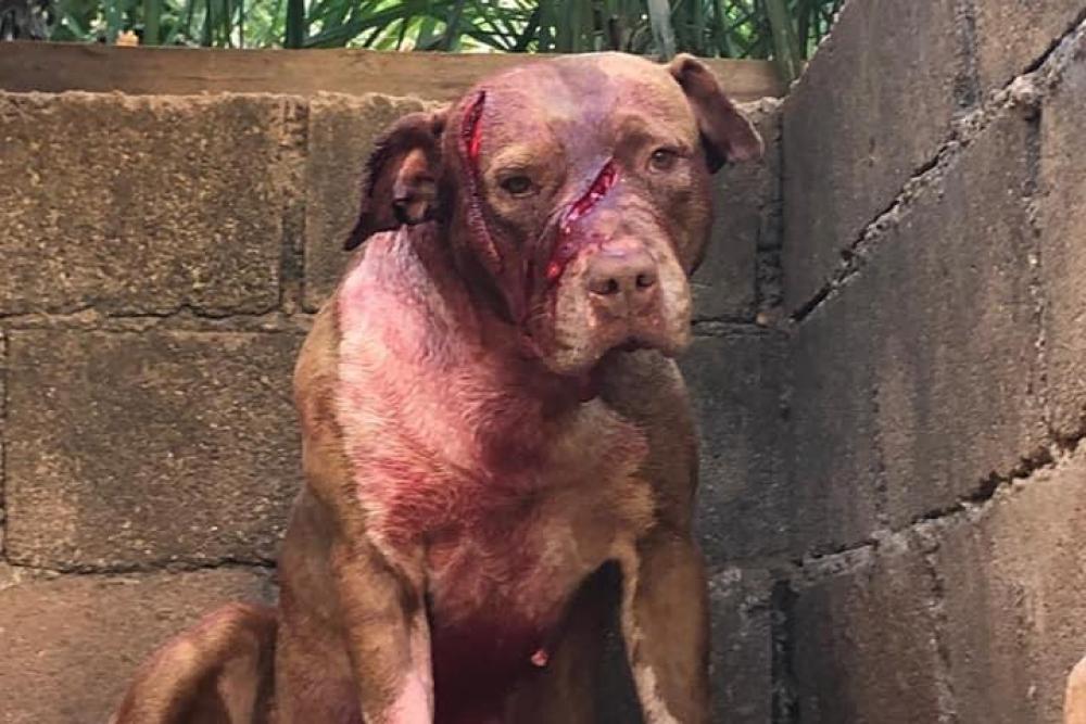 Homem que esfaqueou cachorros é procurado em Araxá